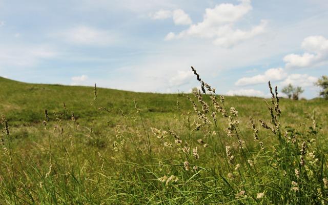 grassy field wallpaper