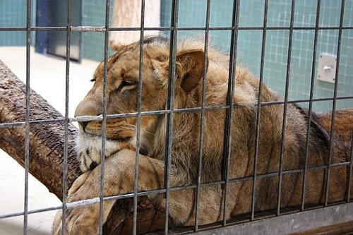 Berlin zoo