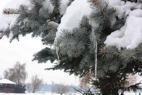 tree under snow