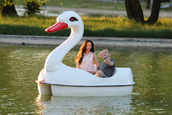 photographer and swan