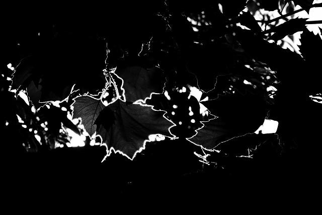 Leaves / contours