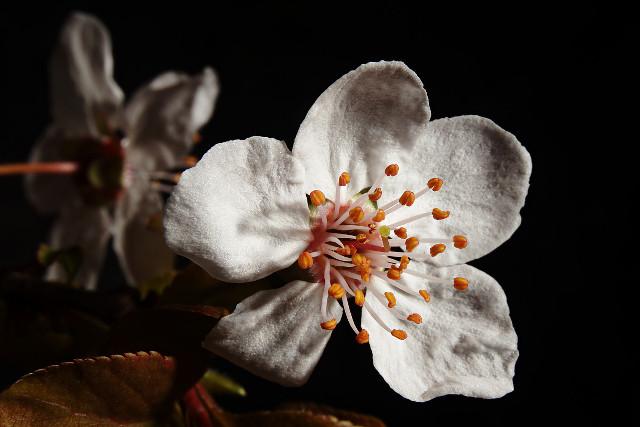 close blossom