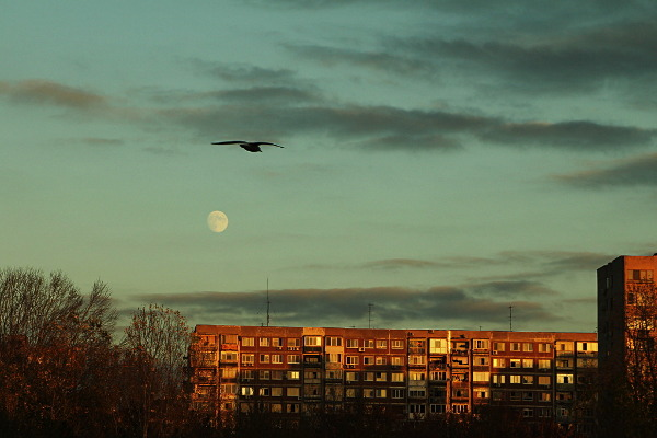moon and bird