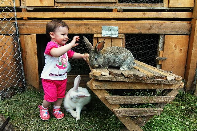 girl bunnies
