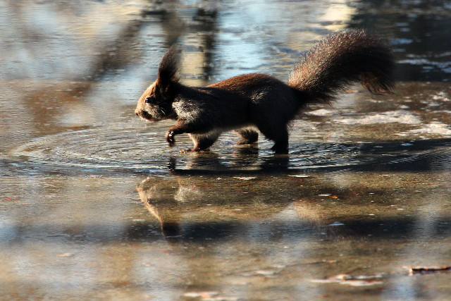 reflection on a squirrel