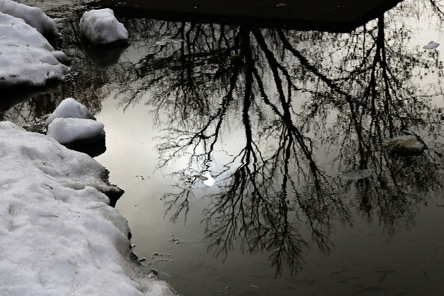 mirrored winter