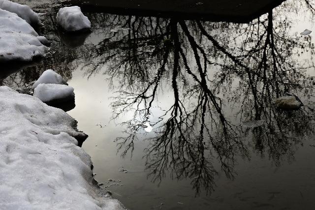 mirrored winter