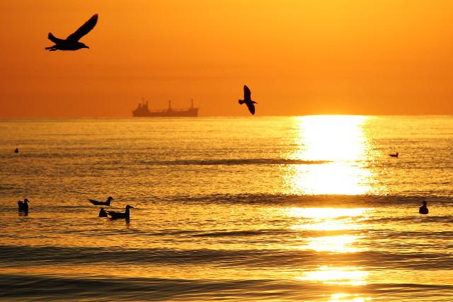 shipping birds