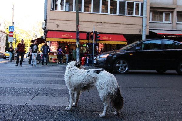the conscious dog