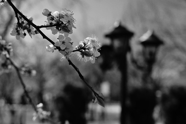 Retro spring