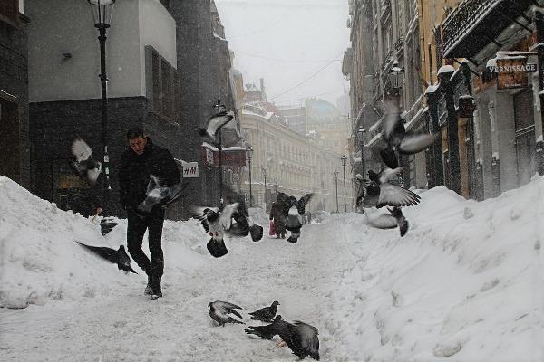 pigeons snow