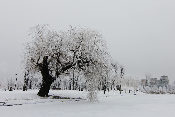winter landscape in the city