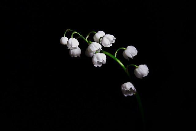 Minimalistic spring