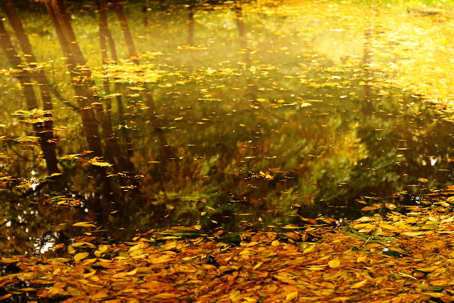 autumn in a pond