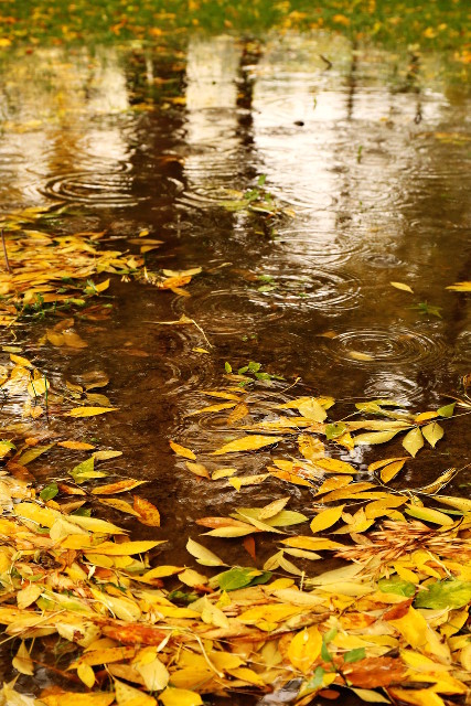 more reflections on autumn