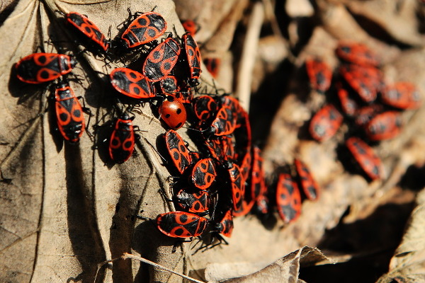 bugs = spring