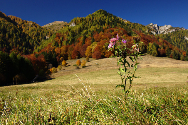 the flower, the mountain and the autumn