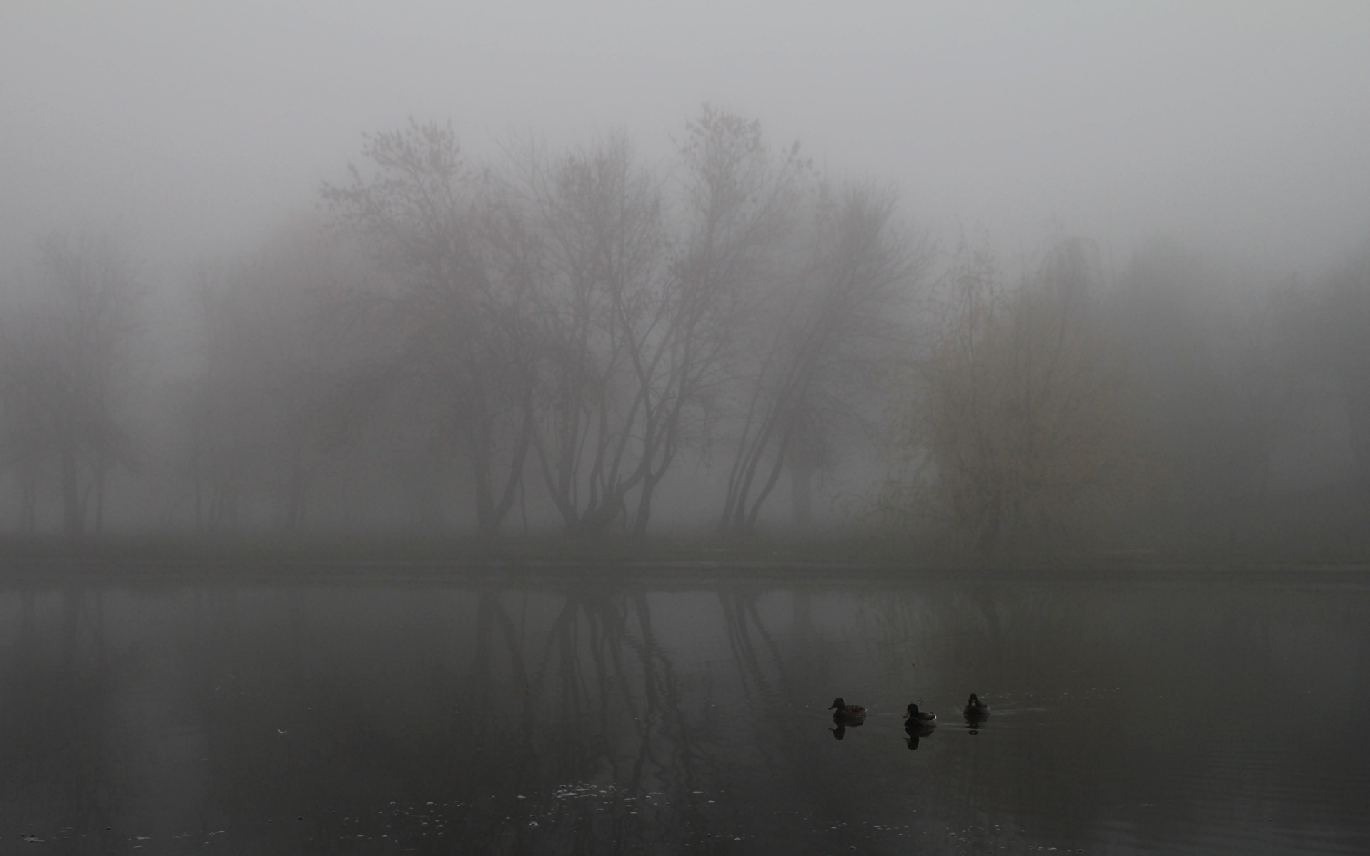 the mist Define mist: water in the form of particles floating or falling in the atmosphere at or near the surface of the earth and — mist in a sentence.