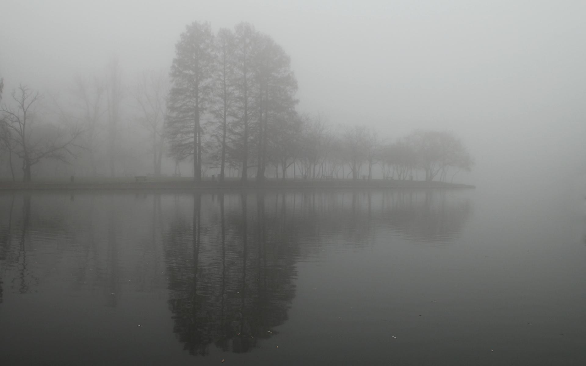 Fog Art And Design